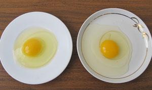 сравнение вида свежего и несвежего яиц
