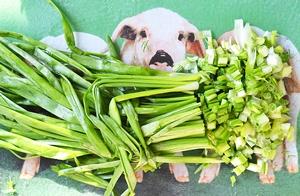 Зеленый лук мелко порезанный для салата со скумбрией