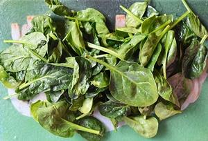 Вымытый и высушенный шпинат для приготовления рагу
