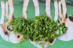 Мелко порезанные укроп и зеленый лук