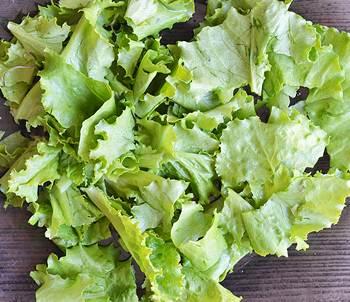 Салатные листья порванные