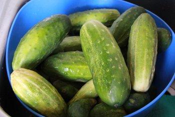 Огурцы для консервирования острого салата на зиму
