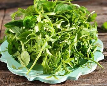 Микс зеленого салата или рукколы для подачи креветок
