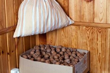 Orehi i sushshka-hranenie ovoshhej i fruktov zimoj